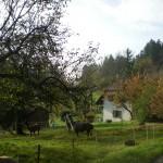 riedholz lebern solothurn